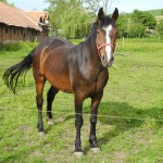pferde02